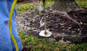 Houston Tree Fertilization Services