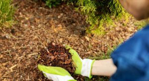 Mulching Around Trees