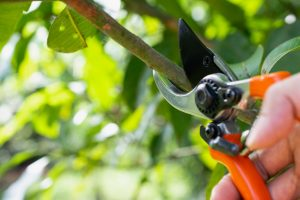 Tree Trimming Basics