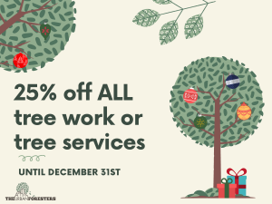 25% off ALL tree work