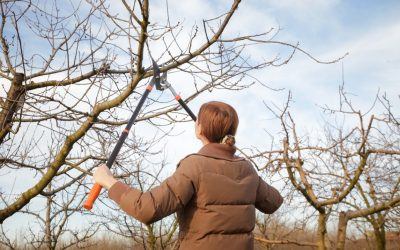 What is the Best Time of the Year to Trim Trees?