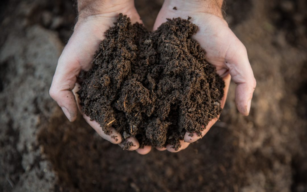 Don't Forget The Soil!