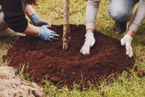 Tree Soil Condition