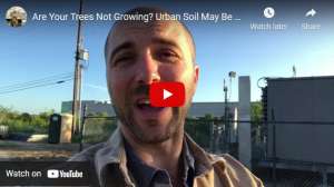 Are your trees not growing? Urban soil may be to blame.