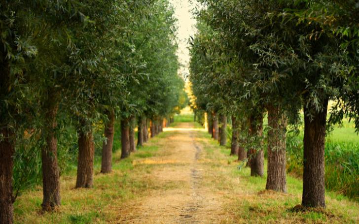 Texas Tree Services