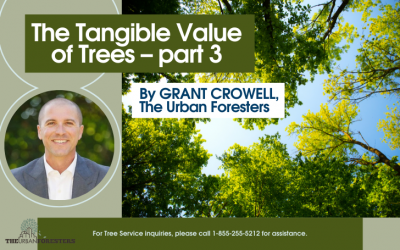 The Tangible Value of Trees – part 3