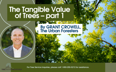 The Tangible Value of Trees – part 1